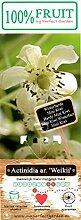 Bayern Kiwi Pflanze, (Actinidia arguta), Sorte: