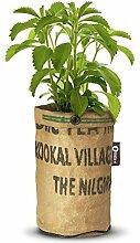 Baza - Seeds & Tea Garden - Pflanze: BIO Stevia - Fertiger Zuchtbeutel mit Erde & Samen - Jutesack