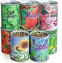 Bazaar Mini Kann Mini Zimmerpflanze Blumen-Samen