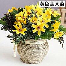 Beata.T Künstliche Blumen Anzug Hanf Blumentöpfe Amerikanische Chrysantheme Ganze Blume Gefälschte Blume Topf Büro Pflanze Vergossen Einrichtung (17Cm), C