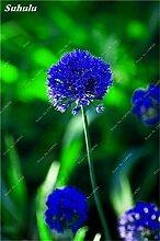 Beauty Garden Creative-Pflanze 100Pcs Riesenzwiebel Samen Allium Giganteum Blumensamen Staude Blumen Bonsai Pflanze DIY Hausgarten 18