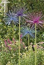 Beauty Garden Creative-Pflanze 100Pcs Riesenzwiebel Samen Allium Giganteum Blumensamen Staude Blumen Bonsai Pflanze DIY Hausgarten 24