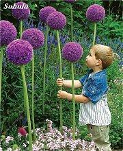 Beauty Garden Creative-Pflanze 100Pcs Riesenzwiebel Samen Allium Giganteum Blumensamen Staude Blumen Bonsai Pflanze DIY Hausgarten 2
