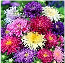 Beautytalk-Garten 100 stück Regenbogen