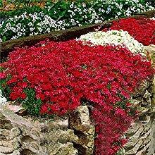 Beautytalk-Garten 100Stück Felsenkresse Samen
