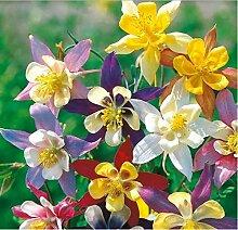 Beautytalk-Garten 50Pcs Blumen Samen Mix Butterfly