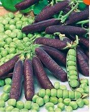 Beautytalk-Garten Bio Erbse Samen Gemüse Bohne