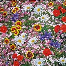 Beautytalk-Garten Blumenmischung Wildblumen Samen