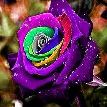 Garten Beautytalk-Garten 50pcs winterharter Rose Samen Rarit/äten Blumensamen mehrj/ährig Rose Saatgut Schnittblumen Duftend Blumen f/ür Balkon