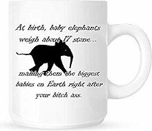Bei der Geburt wiegen Elefantenbabys etwa 17