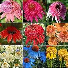 BELLFARM Echinacea Misch9 Farben Big Blooms