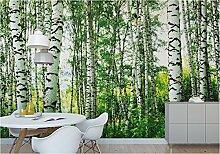 fototapete birkenwald g nstig online kaufen lionshome. Black Bedroom Furniture Sets. Home Design Ideas