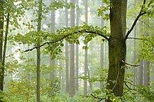 Berlintapete - Wallpaper On Demand - Fototapete - Wald - Flora - HERBSTSTIMMUNG Nr. 39567