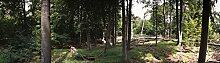 Berlintapete - Wallpaper On Demand - Fototapete - Wald - Panoramen Xxl - Buchenwaldpanorama Nr. 6813