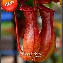 Bestseller. Kannenpflanzen Samen Blumen und Kräuter Fleischfressende Pflanzen reinigen die Luft fangen Insekten 50Teilchen/viel, # e2N416
