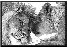 Bezauberndes kuschelndes Löwenpaar im