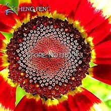 Big Sale 100 Stück / Los Chrysanthemum Samen Seltene Blumen-Samen-Garten Topfpflanzen broschiert Bonsai Balkon Zimmer Blumen-Uhr *