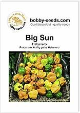 Big Sun Habanero Chili- Peperonisamen von