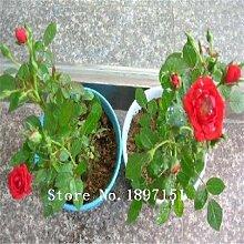 Big Verkauf 200 Samen / pack, Rot Schwarz Seltene Rosen-Samen Pflanze Sämling Garten Samen Blumensamen