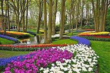 BILD TAPETE PAPERMOON, Tulpen im Keukenhof Park