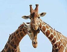 BILD TAPETE PAPERMOON, Verliebte Giraffen ,VLIES