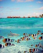 Bilderdepot24 Fototapete selbstklebend Bora Bora -