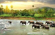 Bilderdepot24 Fototapete selbstklebend Elefanten
