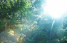 Bilderdepot24 Fototapete selbstklebend Regenwald