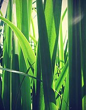 Bilderdepot24 Poster selbstklebend Gras - Vintage