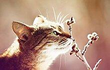Bilderdepot24 Vlies Fototapete - Katze - Vintage -