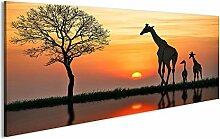 bilderfelix® Acrylglasbild Giraffen