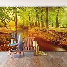 Bilderwelten - Fototapete Wald - Herbstwald -