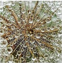 Bilderwelten Glasbild Wandbild Glas Kunstdruck