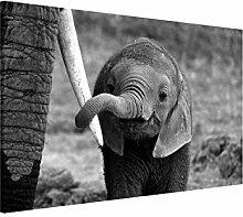 Bilderwelten Magnettafel - Elefantenbaby -