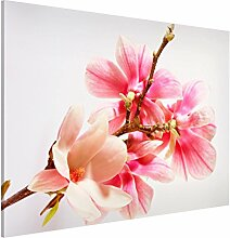 Bilderwelten Magnettafel - Magnolienblüten -