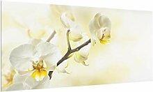 Bilderwelten Spritzschutz Glas - Orchideen Zweig -