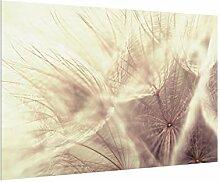 Bilderwelten Spritzschutz Glas - Pusteblumen mit