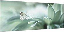 Bilderwelten Spritzschutz Glas Schmetterling &