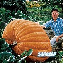 Bio-Garten Gemüsesamen NON-GMO Bio-Tomaten-Pfeffer-Kürbis Gurke Aubergine Karotte Mais Muskmelon Kohlsamen 10pcsPumpkinA