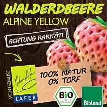Bio Walderdbeeren Alpine Yellow