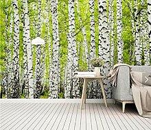 Birkenwald Wandbild Fototapete für Wohnzimmer