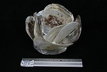 Bitacora Armleuchter Shells Streichhölzer Kerze