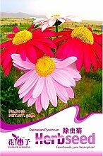 Blaue Aster Alpinum Staude Blumensamen, Originalverpackung, 50 Samen / Pack, schnell wachsende Pflanze A236