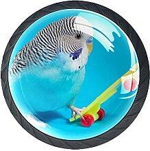 Blauer Wellensittich Papagei Roller