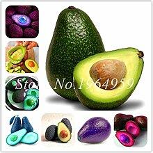 Bloom Green Co. 10 PC mischten Avocado Samen