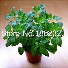 Bloom Green Co. 100 Partikel Stevia Bonsai Stevia