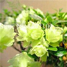 Bloom Green Co. 100 Stück Exotische Japanische