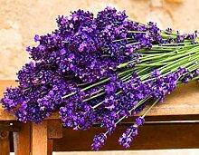 Bloom Green Co. 100 Stück Lavendel Bonsai Kraut