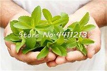 Bloom Green Co. 200 PC/Beutel Stevia flores Stevia