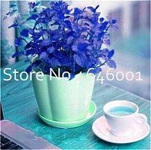 Bloom Green Co. Bonsai 100pcs Stevia Rebaudiana